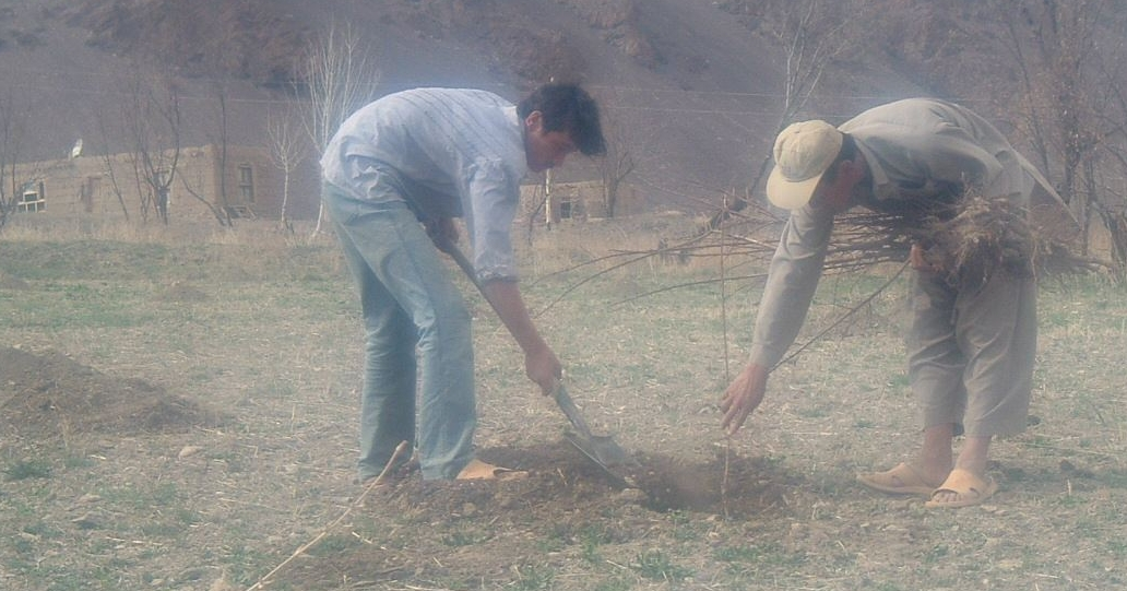 planting_the_tree